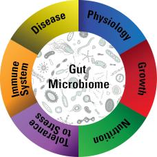 health&gut_microbiome