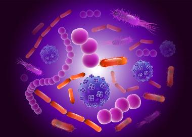 Screenshot_2018-11-16 Healthy aging Gut bacteria may prevent disease